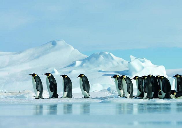 la-marcha-de-los-pinguinos